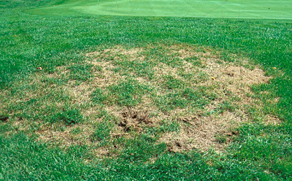 """Grub Control is a """"Must Have"""" for Your Lawn Care Program"""
