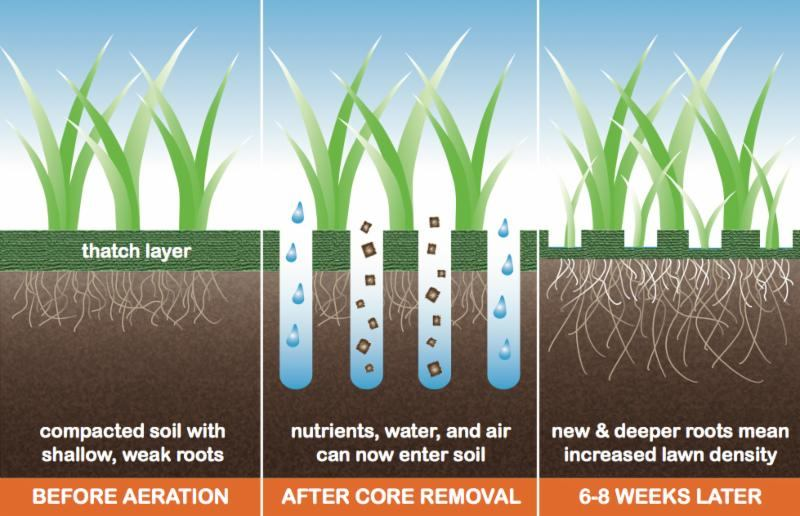 Benefits of Fall Core Aeration